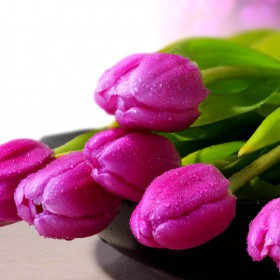 Purple Tulips Flowers Wallpapers 01